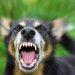 犬が怒る5つの事について~理由と対処法~