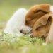 犬は寝床が大切!睡眠の質を高めるコツについて