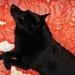 飼い主と愛犬が仲良くできる最高の方法は、一緒に寝る事《室内小型犬編》