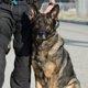警察犬訓練士の給料っていくら?相場などをご紹介