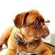 犬の介護用品を活用