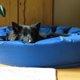 老犬を介護する時の3つの選択肢