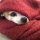 老犬の寒さ対策