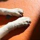老犬の足の衰え