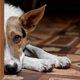 老犬の介護の選択肢