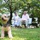 老犬との環境を見直す