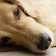 老犬の健康管理
