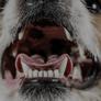 犬のトラブル