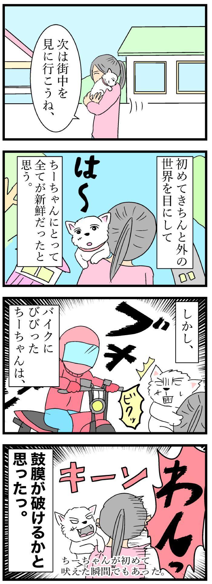 ちーちゃんですけどもっ【第107話】