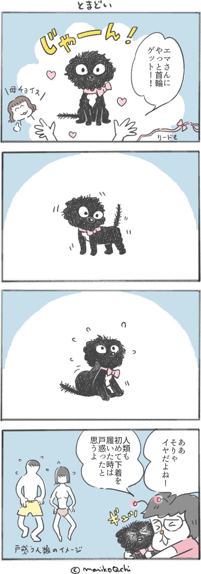 犬と暮らせば第102話