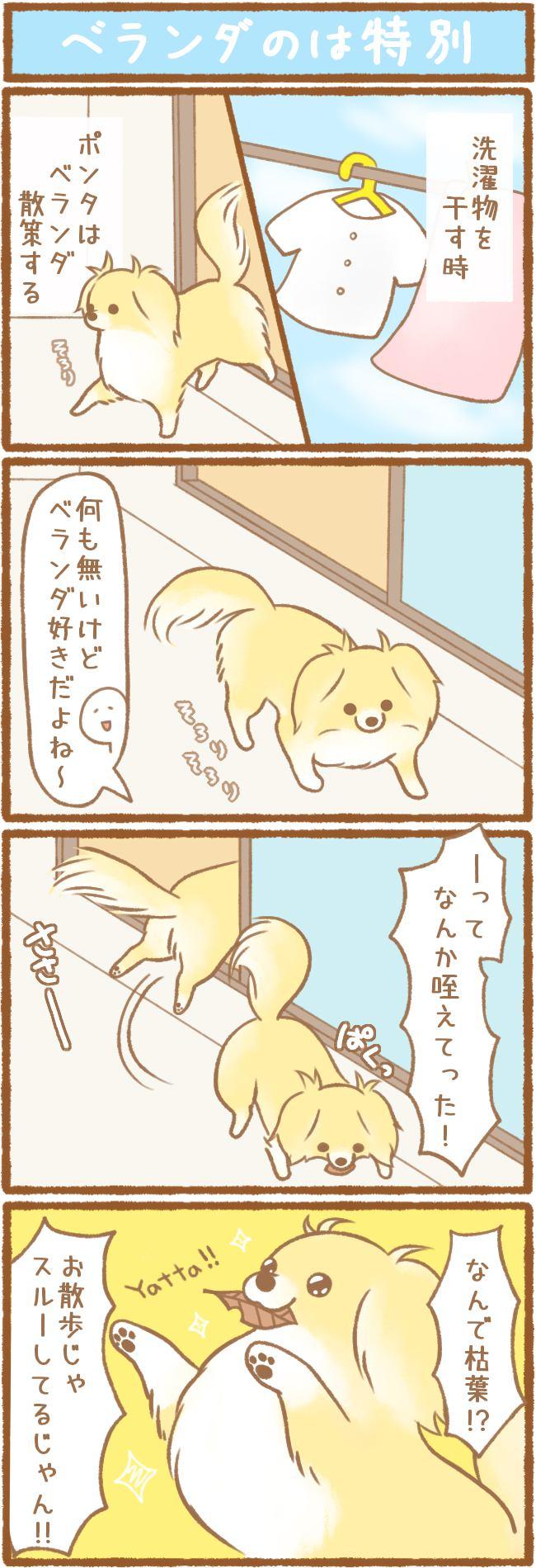 ただの犬好きです。第61話 ベランダのは特別