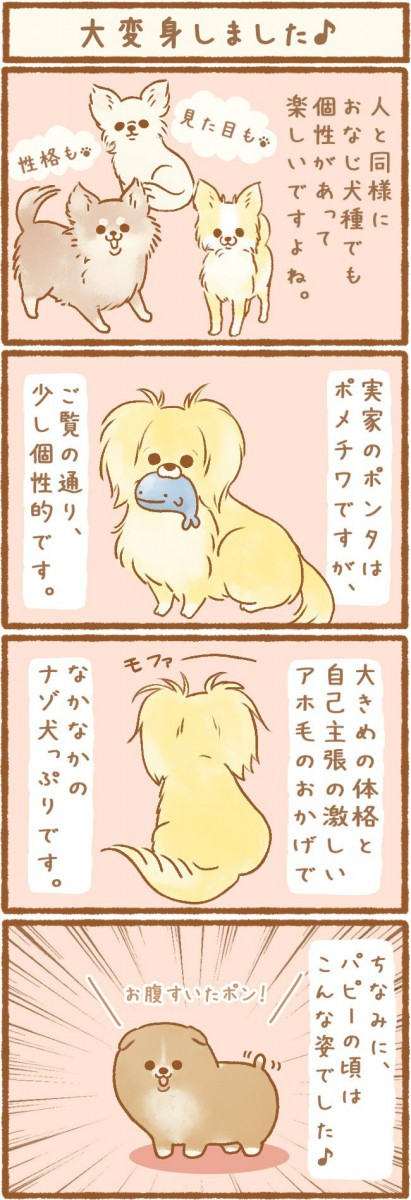 ただの犬好きです。第5話