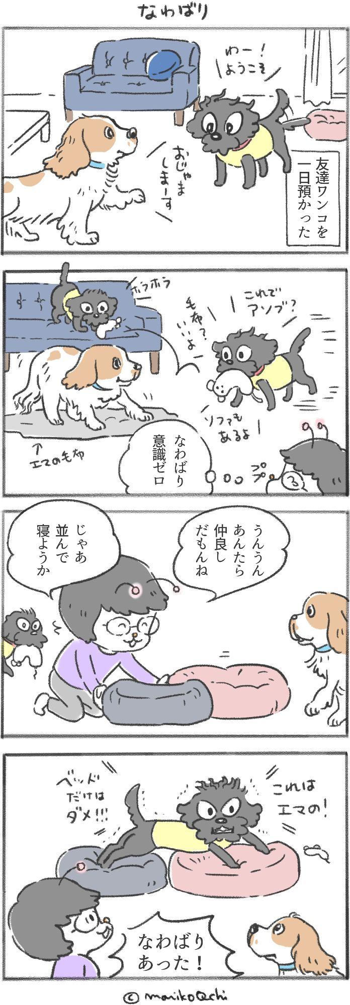 犬と暮らせば第46話