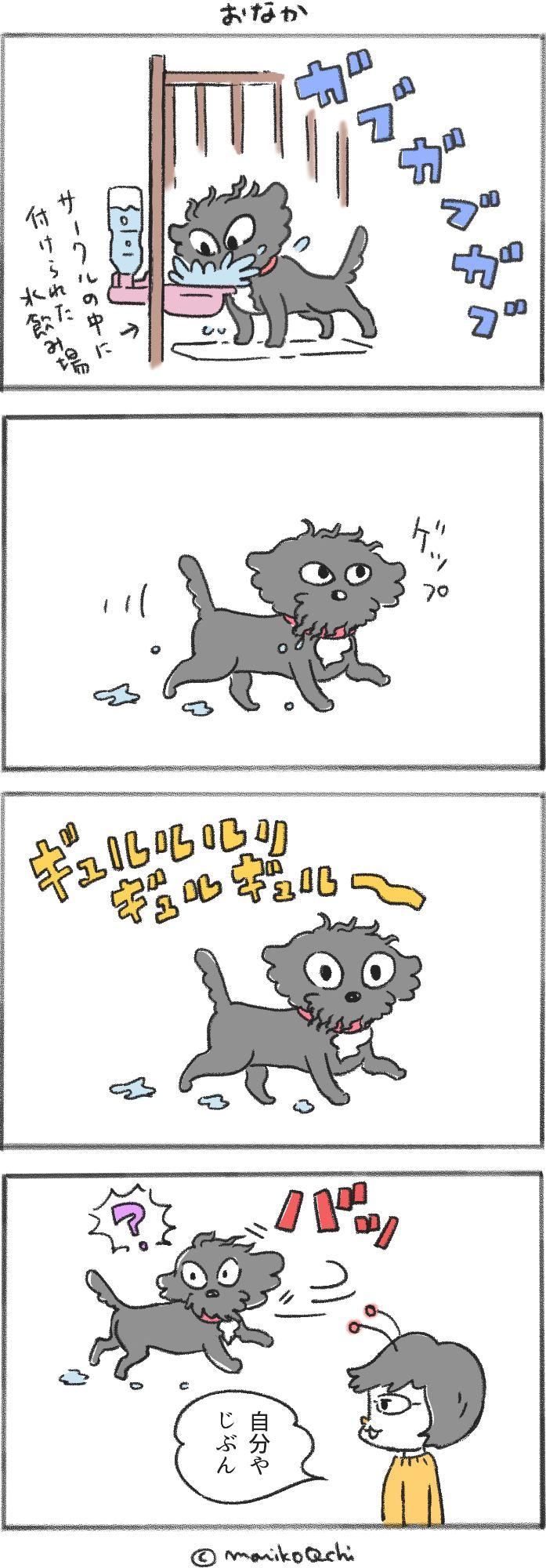 犬と暮らせば第33話