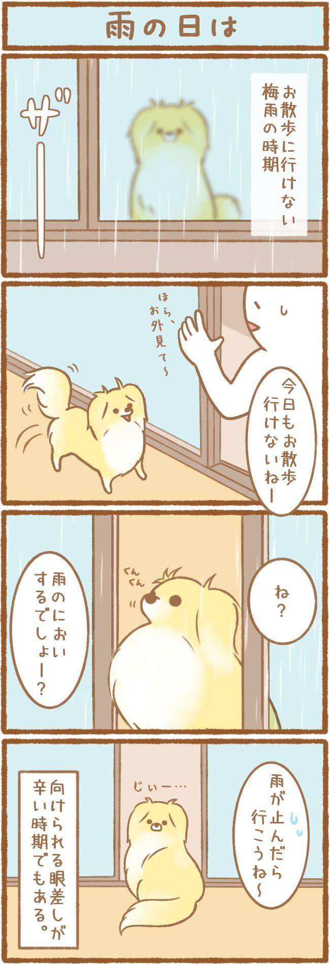 ただの犬好きです。第54話 雨の日は