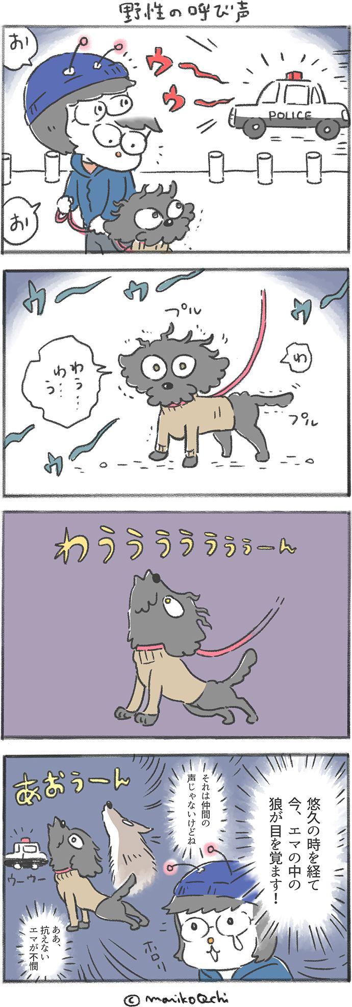 犬と暮らせば第61話