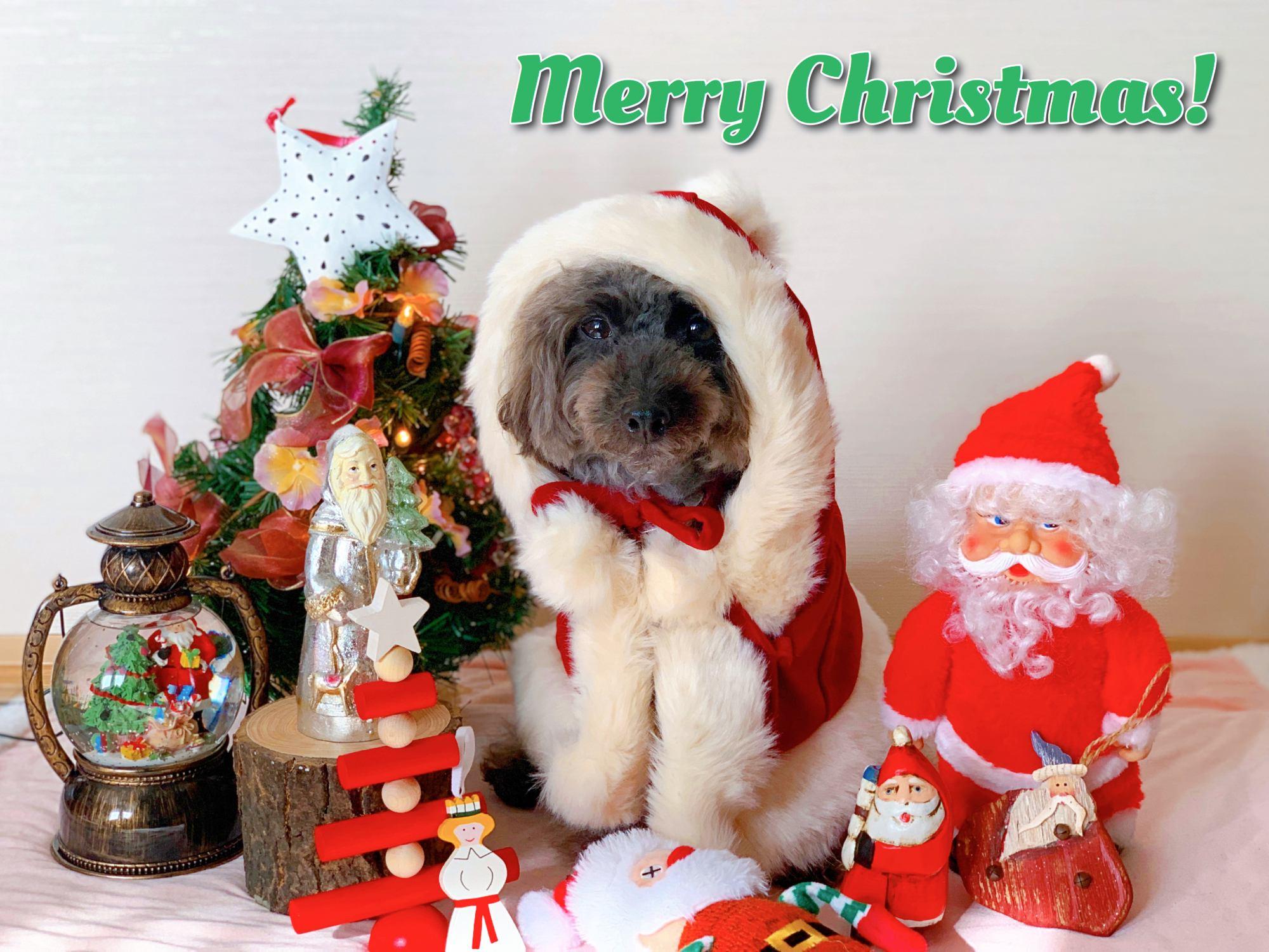 エマさんからメリークリスマス
