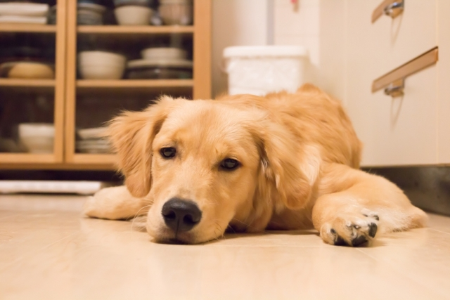 犬がかかりやすい病気