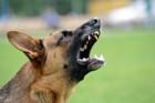 犬が吠える理由とは?主な心理と無駄吠えをやめさせるしつけ方