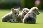 犬の性格診断テスト!飼い始めの人やこれから迎える人におすすめ