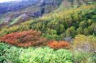 那須高原は犬も楽しめるスポットがたくさん!おすすめ宿泊施設♪