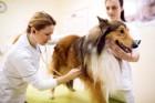 愛犬の健康診断と予防医療 生涯のスケジュールについて