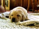犬の肺炎の正しい知識~症状から治療法まで~