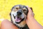 飼い主の株が上がる!犬からもっと愛されるためにやるべき6つのこと
