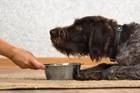 犬の餌入れおすすめ人気15選!ステンレス製から陶器製やスタンド付きまで
