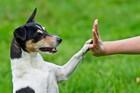 犬の「ターゲットトレーニング」のやり方と教えるメリット