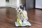 犬が太りやすくなる年齢や時期とは?