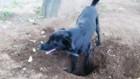 犬が砂や土、小石を食べてしまう理由