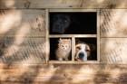 愛犬がケージから出てこないときの4つの気持ち