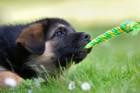 犬が噛みついて離れない!効果的に口を離す方法とは?