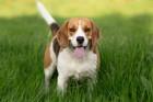 よく吠えると言われている犬種7選