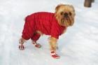 犬用靴と靴下のメリット・デメリット