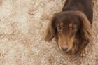 犬が室内で怪我をする3つの原因とやりたい対策