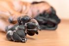 犬を飼って床が臭くなった?主な原因とおすすめの消臭方法