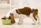 犬にとって使いやすいフードボウルの選び方と食器台の必要性について