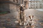 見直そう!愛犬のための地震対策