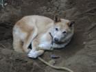 犬の穴掘りの習性を知って気持ちを理解しよう