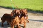 犬の散歩コースを変更するメリット・デメリット