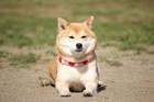 犬がほふく前進で近寄ってくる心理
