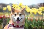 日本各地で開催!犬のお祭りまとめ5選