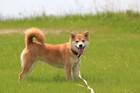 【実際にあった話】散歩中に『毒エサ』を口にした犬たち