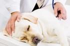 動物の夜間救急病院に行く際の注意点