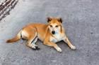 もしも突然、愛犬が行方不明になったらあなたはどうしますか?