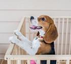 犬のケージ手作りアイデア3選
