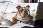 愛犬と一緒に大掃除!犬用品の断捨離方法と注意点
