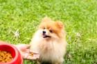 犬がご飯を食べない!「病気」と「わがまま」の違いとは
